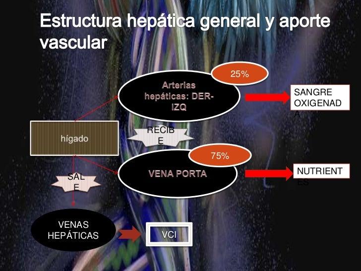 Capsula de tejido conjuntivo fibroso (cápsula de Glisson)