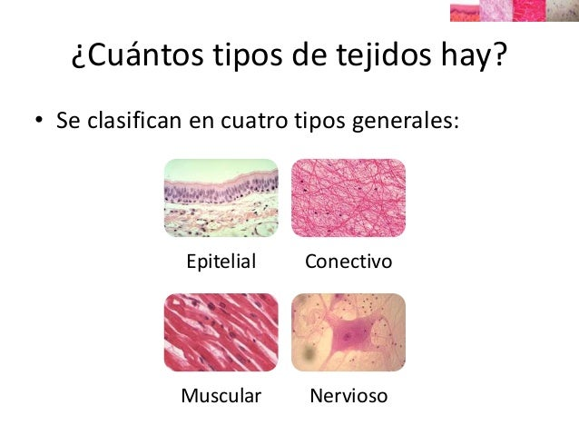 Histolog a introducci n histology introduction - Tipos de tejados ...