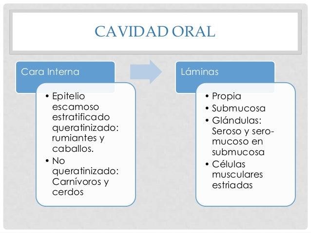 CARRILLOS O MEJILLAS  • Revestimiento externo: Piel • Capa media: muscular • Revestimiento interno: Mucosa • Mucosa bucal:...