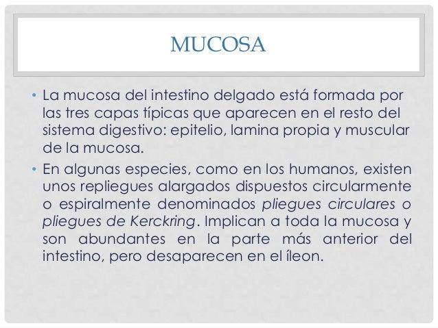 CAPA MUCOSA