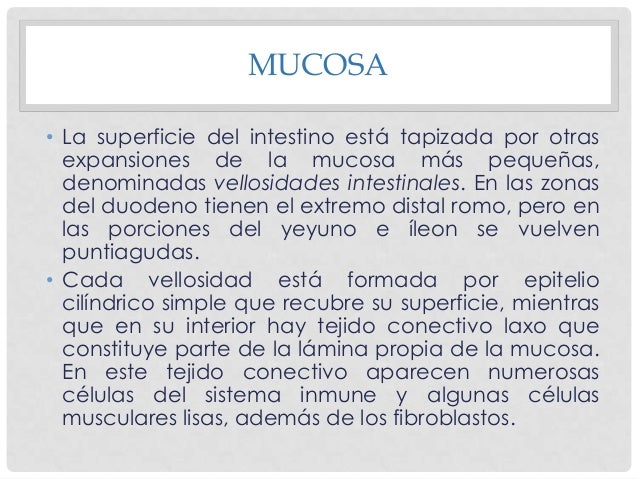 MUCOSA • Una red importante de capilares sanguíneos con endotelio fenestrado, es decir, con aberturas en sus paredes, se d...