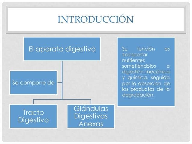 INTRODUCCIÓN El aparato digestivo  Se compone de  Tracto Digestivo  Glándulas Digestivas Anexas  Su función es transportar...
