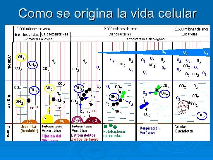 HistologíA Y CitologíA Humana (I) Slide 2
