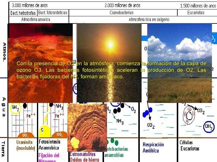 HistologíA Y CitologíA Humana (I) Slide 3