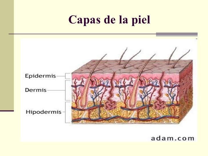 Histología y fisiología de la piel
