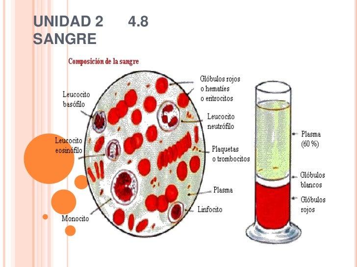 UNIDAD 2   4.8SANGRE