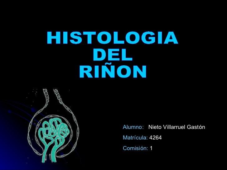 HISTOLOGIA  DEL  RIÑON Alumno:  Nieto Villarruel Gastón Matrícula:  4264 Comisión:  1