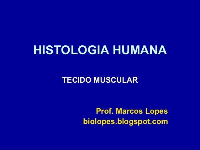 HISTOLOGIA HUMANA   TECIDO MUSCULAR           Prof. Marcos Lopes       biolopes.blogspot.com