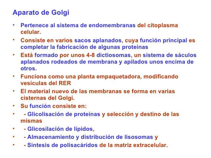 Aparato de Golgi <ul><li>Pertenece al sistema de endomembranas  del citoplasma celular.  </li></ul><ul><li>Consiste en var...