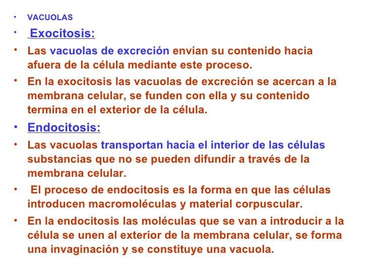 <ul><li>VACUOLAS </li></ul><ul><li>Exocitosis: </li></ul><ul><li>Las  vacuolas de excreción  envían su contenido hacia afu...
