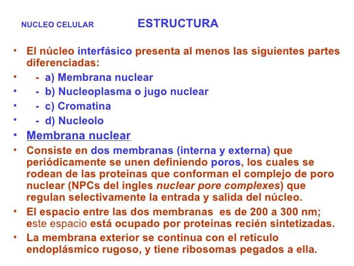 NUCLEO CELULAR  ESTRUCTURA <ul><li>El núcleo  interfásico  presenta al menos las siguientes partes diferenciadas: </li></u...