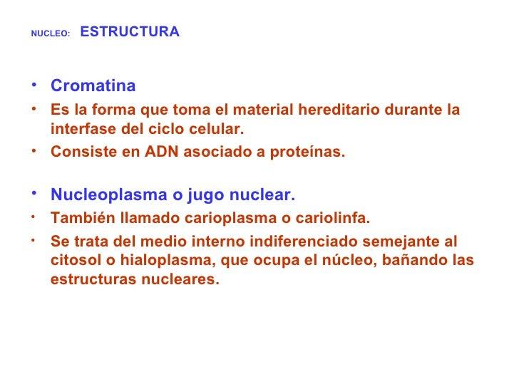 NUCLEO:   ESTRUCTURA <ul><li>Cromatina  </li></ul><ul><li>Es la forma que toma el material hereditario durante la interfas...