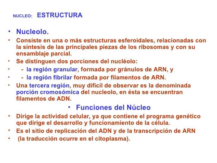 NUCLEO:   ESTRUCTURA <ul><li>Nucleolo. </li></ul><ul><li>Consiste en una o más estructuras esferoidales, relacionadas con ...