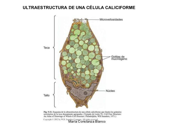 hormonas proteicas y esteroideas pdf