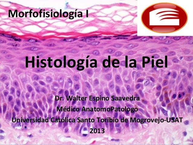 Morfofisiología I   Histología de la Piel             Dr. Walter Espino Saavedra              Médico AnatomoPatologoUniver...