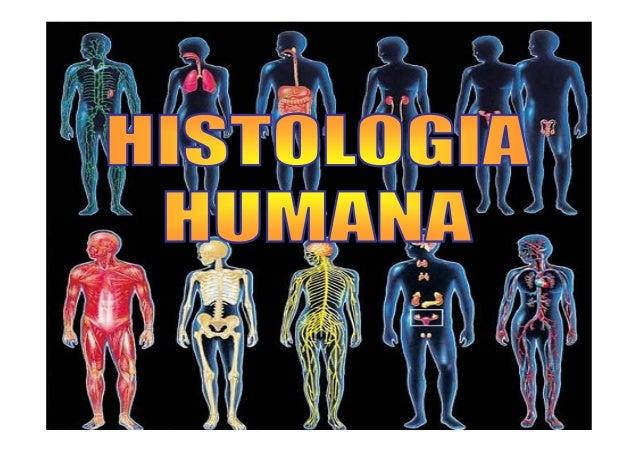 ÁREA DE ESTUDO: A Histologia Humana (grego histos – tecido) é a ciência que estuda os tecidos do corpo humano. Os tecidos ...