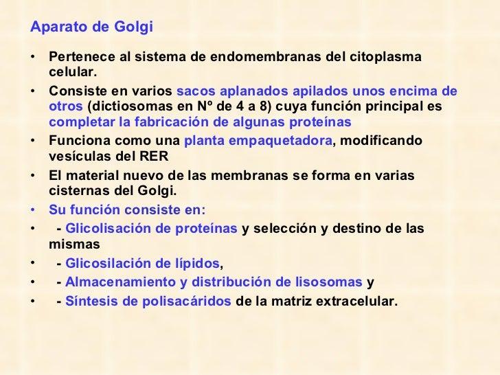 Aparato de Golgi <ul><li>Pertenece al sistema de endomembranas del citoplasma celular.  </li></ul><ul><li>Consiste en vari...