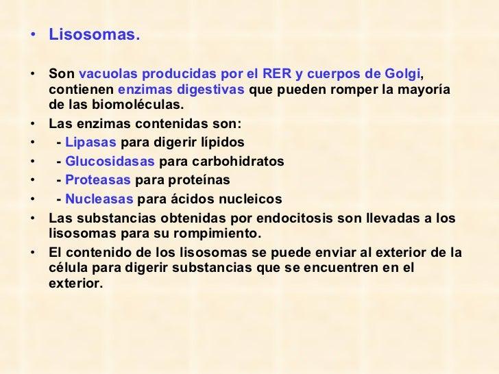 <ul><li>Lisosomas.   </li></ul><ul><li>Son  vacuolas producidas por el RER   y cuerpos de Golgi , contienen  enzimas diges...