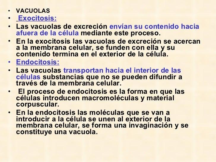 <ul><li>VACUOLAS </li></ul><ul><li>Exocitosis: </li></ul><ul><li>Las vacuolas de excreción  envían su contenido hacia afue...