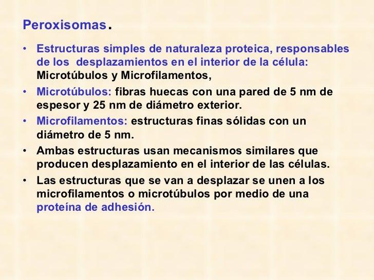 Peroxisomas .  <ul><li>Estructuras simples de naturaleza proteica, responsables de los  desplazamientos en el interior de ...