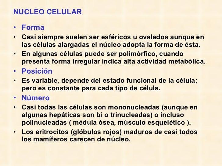 NUCLEO CELULAR <ul><li>Forma </li></ul><ul><li>Casi siempre suelen ser esféricos u ovalados aunque en las células alargada...