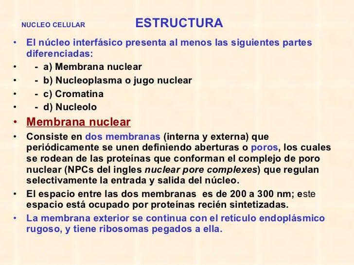 NUCLEO CELULAR   ESTRUCTURA <ul><li>El núcleo interfásico presenta al menos las siguientes partes diferenciadas: </li></ul...