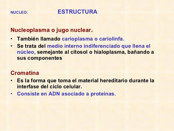 NUCLEO:   ESTRUCTURA <ul><li>Nucleoplasma o jugo nuclear .   </li></ul><ul><li>También llamado  carioplasma o cariolinfa. ...