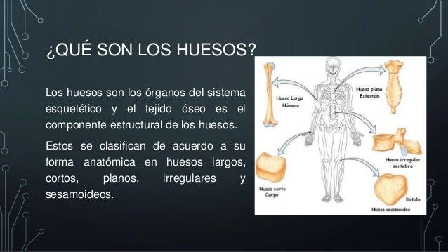 Histología del hueso (Gartner)