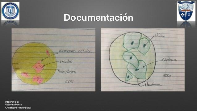 Laboratorio De Histología Células De La Mucosa Bucal