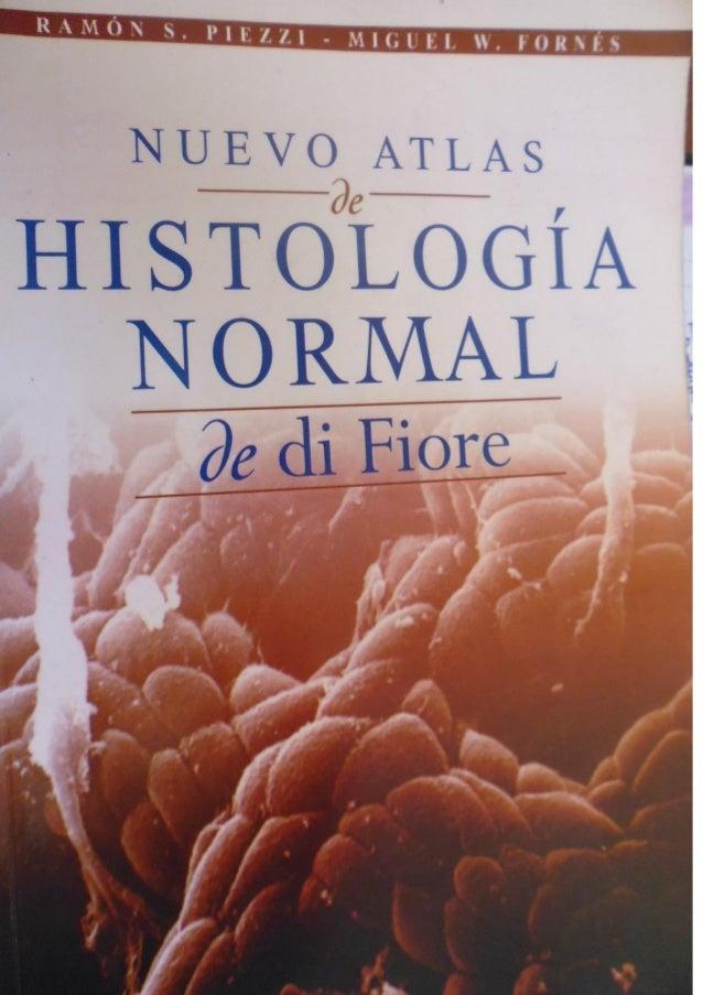Histologia normal de difiore