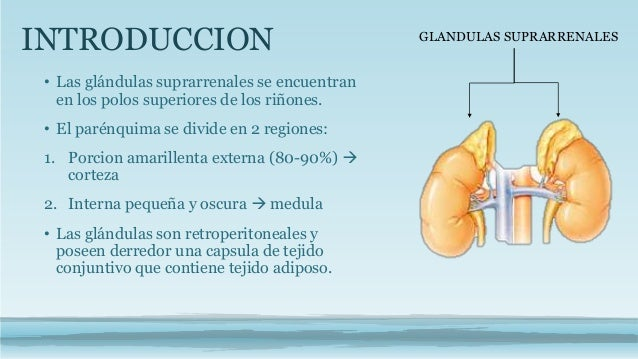 Histologia suprarrenales