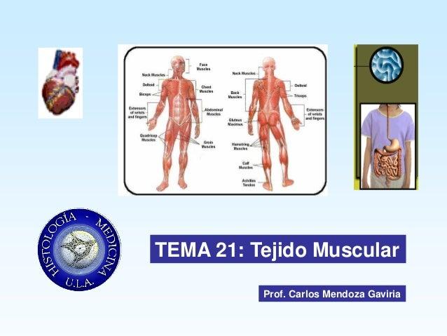 TEMA 21: Tejido Muscular          Prof. Carlos Mendoza Gaviria