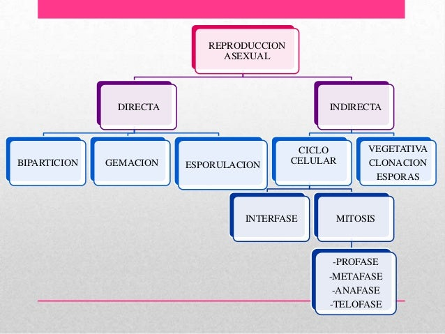 Reproduccion asexual directa o indirecta