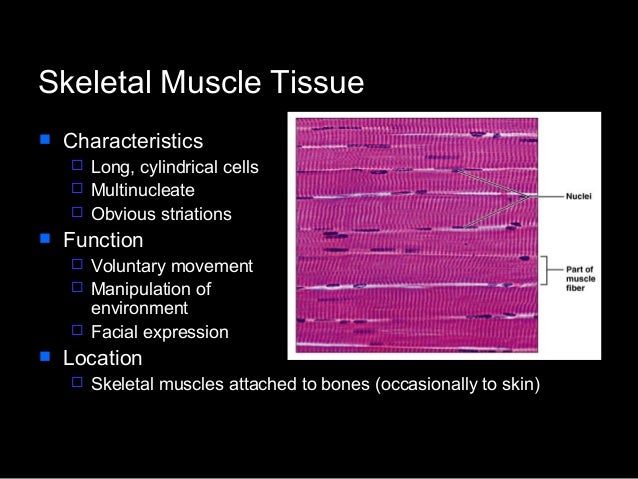 histological features of skeletal muscle Neuromuscular junction and activation of skeletal muscle cellsidentify the histological landmarks of skeletal muscle contrast the structure and function of skeletal, smooth, and cardiac muscle tissue.