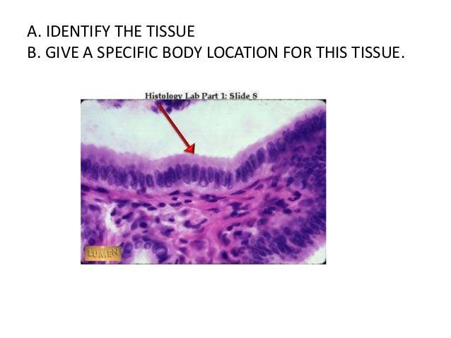 histology quiz