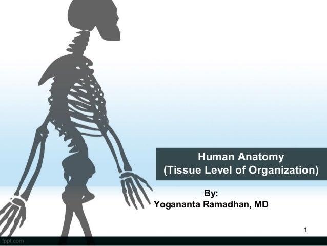 Human Anatomy (Tissue Level of Organization) By: Yogananta Ramadhan, MD 1