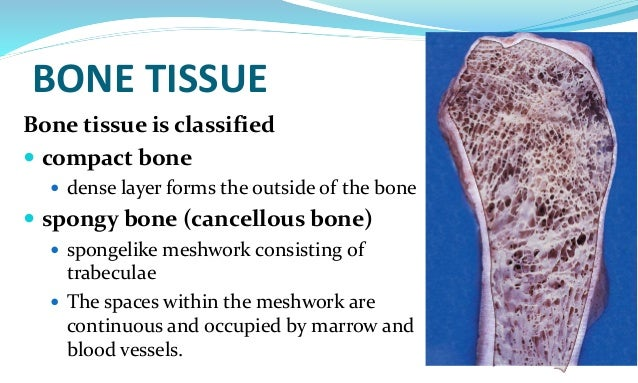 histology of bones This article describes the formation of bone tissue, including the steps and cell types involved learn this topic now at kenhub.