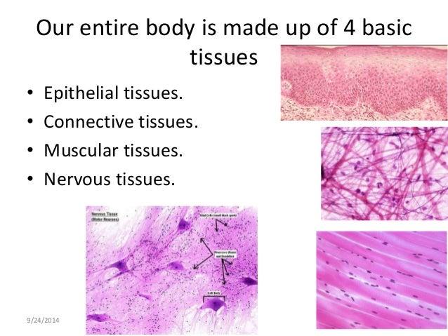epithelial tissue chart