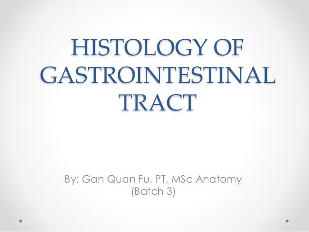 HISTOLOGY OF GASTROINTESTINAL TRACT By: Gan Quan Fu, PT, MSc Anatomy (Batch 3)