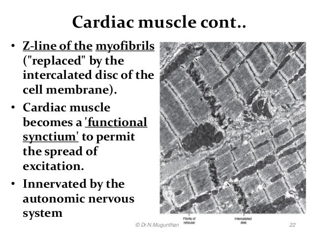 histology of muscle pdf lecture notes by drnmugunthan
