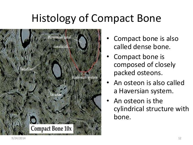 Histology of muscle, cartilage and bone