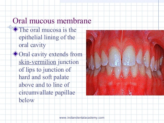 Histology of oral mucous membrane including gingiva