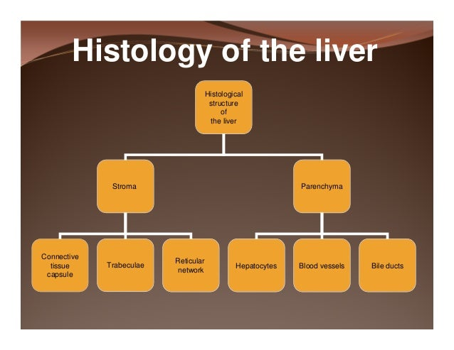 Histology Of The Liver And Gall Bladder Compatibility Mode