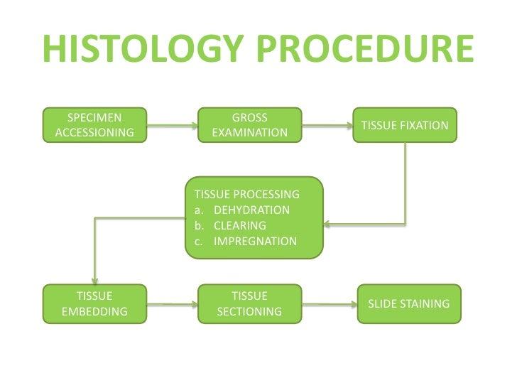 Histology Procedure