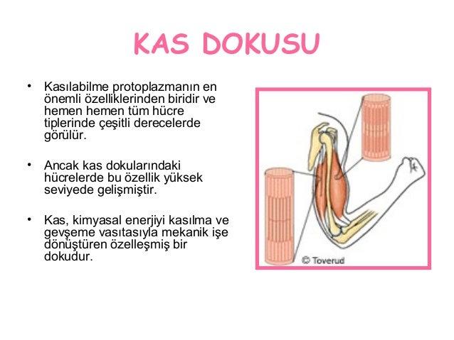 Kas Dokusu Slide 2