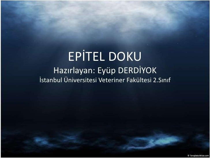 EPİTEL DOKU Hazırlayan: Eyüp DERDİYOK İstanbul Üniversitesi Veteriner Fakültesi 2.Sınıf<br />