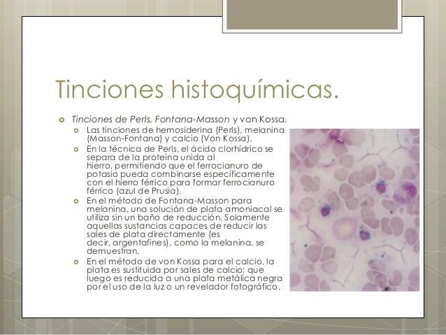 coloraciones especiales en histologia pdf free