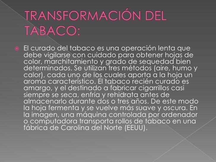 TRANSFORMACIÓN DEL TABACO:<br />El curado del tabaco es una operación lenta que debe vigilarse con cuidado para obtener ho...