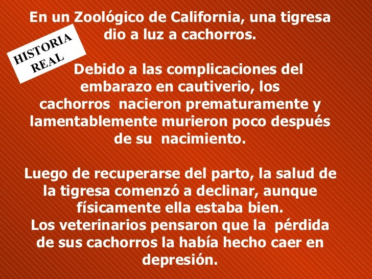 En un Zoológico de California, una tigresa dio a luz a cachorros.   Debido a las complicaciones del embarazo en cautiver...