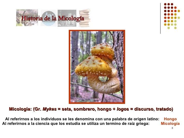 Historia De La Micologa Slide 3